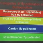 Bee, flora, Flower, Fruit Fly, nature, Peninsular, Pollinator, Wild Orchid, 传粉者, 授粉, 果蝇, 生物学研究, 腐肉蝇, 蜜蜂, 野生兰花, 马来西亚