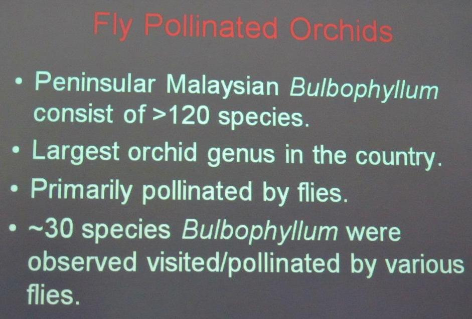 Bee, Biology Studies, Borneo, Carrion Fly, Peninsular, Pollinated, Wild  Orchid