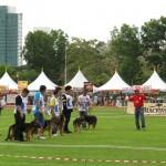 Borneo, competition, event, Kuching, malaysia, pets lover, Sarawak Kennel Association, SKA, 古晋市, 德国牧羊犬, 沙捞越, 猫城
