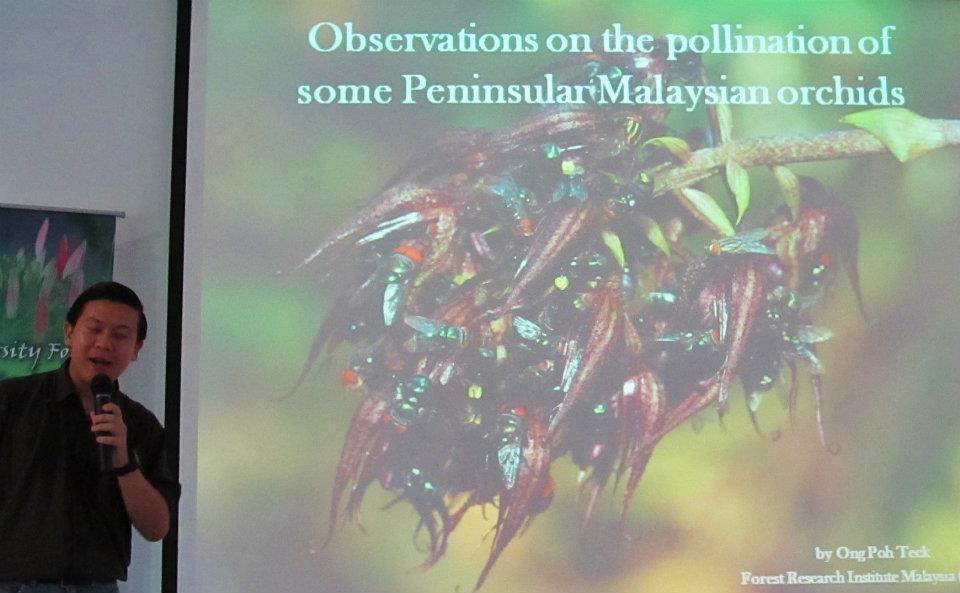 Bee, Biology Studies, Fruit Fly, Peninsular, Pollinator, Wild Orchid, 传粉者, 授粉, 果蝇, 生物学研究, 腐肉蝇, 蜜蜂, 野生兰花, 马来西亚