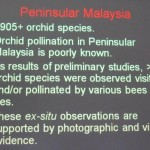 Bee, Biology Studies, Borneo, Carrion Fly, Pollinated, Pollinator, Wild Orchid, 传粉者, 授粉, 果蝇, 生物学研究, 腐肉蝇, 蜜蜂, 野生兰花, 马来西亚
