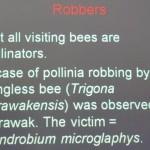 Bee, Borneo, Flower, Fruit Fly, Pollinated, Wild Orchid, 传粉者, 授粉, 果蝇, 生物学研究, 腐肉蝇, 蜜蜂, 野生兰花, 马来西亚