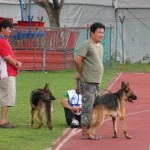 Borneo, competition, event, specialty Show, Kuching, malaysia, pets lover, SKA, 古晋市, 德国牧羊犬, 沙捞越, 猫城