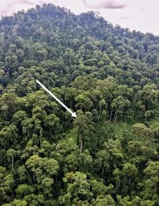 nature, Danum Valley, Meranti, 沙巴, Shorea, tourist attraction, tourism, jungle, rainforest,