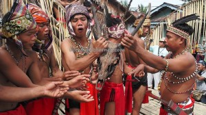 Ceremony, Wisata budaya, dayak, native, tribal event, Dusun Sei Biang, Indonesia, West Kalimantan, Nyobak'ng gawai, paddy harvest festival, cleansing, skull feeding, tengkorak, Tourism, travel guide, traditional, transborder,