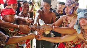 Indigenous dayak, gawai event, ritual ceremony, native, tribal, tribe, village, Kampung Seluas, Borneo, West Kalimantan, harvest festival, cleansing, skull feeding, tourist attraction, travel guide, traditional, backpackers,
