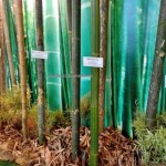 Acacia wood, bamboo essential, bamboo products, Borneo Convention Centre Kuching, trade, consumer fair, event, exhibition, Indonesia, Malaysia, Small & Medium Entrepreneurs, 沙捞越展览会, furniture