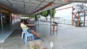 Oriental pied hornbill, Anthracoceros albirostris, 犀鸟, Datuk Tan Yee Khan, destination, family vacation. Perak, Island, Tourism, tourist attraction, travel guide, 旅游景点, 邦咯島, 霹靂州, 马来西亚