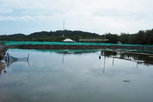 Sarang Tiung, soft shell crab, Gedambaan Beach, Kalsel, Kotabaru, Pulau Laut, Island, objek wisata, outdoors, tourist attraction, travel guide, village, 南加里曼丹, 婆罗州