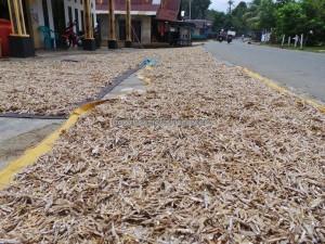 anchovies, Borneo, Indonesia, Kalsel, Island, native, ikan bilis, objek wisata, tourism, tourist attraction, travel guide, fishing village, 南加里曼丹, 婆罗州
