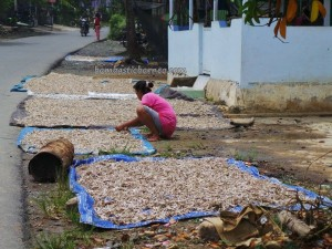 ikan bilis, Beach, Borneo, Indonesia, Kalsel, Kotabaru, Pulau Laut, Island, native, tourism, tourist attraction, travel guide, 南加里曼丹, 婆罗州