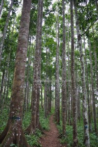 Kalimantan Selatan, Kalsel, Kotabaru, Pulau Laut, Island, Sebelimbingan village, Hutan Wisata Meranti, conservation, ecotourism, nature, Obyek wisata, Tourist attraction, travel guide, 南加里曼丹, 婆罗州