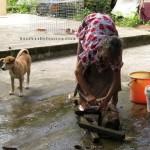 authentic, Community Service, medical seva, orang asal, orang asli, dayak bidayuh, tribe, Kampung, Padawan, Kuching, 沙捞越, traditional,