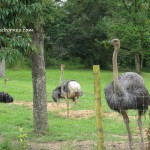 mini zoo, Gambang, Kuantan, Recreational, adventure, nature, outdoors, activities, family holiday, vacation, fruit orchard, chalets, accommodation, ecotourism, tourist attraction,
