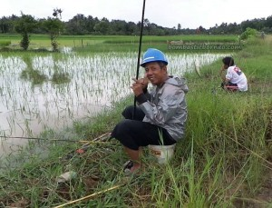 authentic, Indigenous, ethnic, Banjarese, native, Borneo, Hulu Sungai Selatan, Indonesia, paddy field, sawah padi, tourist attraction, obyek wisata, travel guide, 南加里曼丹, 稻田景点