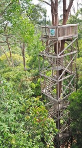 Bukit Bangkirai National Park, Borneo, Kutai Kartanegara, Samboja, canopy bridge, conservation, destination, primary jungle, rainforest, Tourism, tourist attraction, travel guide, 婆罗州旅游景点, backpackers, hills,