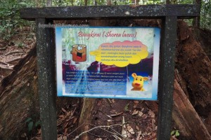 National Park, Borneo, East Kalimantan, Kutai Kartanegara, Samboja, canopy bridge, hutan konservasi, primary jungle, rainforest, tourism, obyek wisata alam, tourist attraction, travel guide, nature reserve, 婆罗州旅游景点