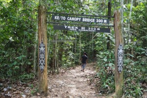 Bukit Bangkirai National Park, Borneo, East Kalimantan, canopy bridge, Jembatan gantung, conservation, backpackers, destination, hutan primer, rainforest, Nature Reserve, outdoors, ecotourism, tourist attraction, travel guide,