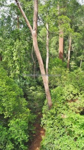 Bukit Bangkirai National Park, Hills, Kutai Kartanegara, Samboja, canopy walk, jembatan tajuk, hutan primer, rainforest, Meranti, ecowisata, Tourism, tourist attraction, travel guide, 东加里曼丹, 旅游景点