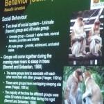 Nasalis Lavartus, Bekantan, Monyet Belanda, nature, conservation, morphology, public awareness talk, Kuching, Borneo, wildlife, primate, Useful information, 沙捞越, 婆罗洲, 长鼻猴