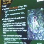 Bekantan, Monyet Belanda, nature, conservation, morphology, public awareness talk, Borneo, Kuching, Malaysia, wildlife, Protected Species, Useful information, 沙捞越, 婆罗洲, 长鼻猴