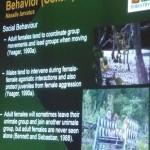 Nasalis Lavartus, Bekantan, nature, conservation, ecology, educational talk, Borneo, Kuching, Malaysia, primate, Protected Species, Useful information, 沙捞越, 婆罗洲, 长鼻猴
