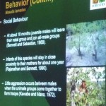 Bekantan, nature, conservation, morphology, public awareness talk, Borneo, Kuching, Malaysia, wildlife, Protected animals, Useful information, 沙捞越, 婆罗洲, 长鼻猴