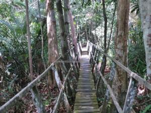outdoors, Kota Balikpapan, Borneo, Kalimantan Timur, conservation, Hutan Lindung, river, hutan primer, primary jungle, proboscis monkey, wildlife, Pusat Konservasi, Tourism, tourist attraction, travel guide,