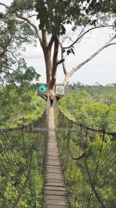 National Park, Hills, Kota Balikpapan, Borneo, East Kalimantan, Kutai Kartanegara, canopy bridge, backpackers, destination, primary jungle, outdoors, ecotourism, Tourist attraction, travel guide, 婆罗州旅游景点