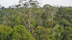 National Park, Hills, Kota Balikpapan, Kalimantan Timur, Kutai Kartanegara, canopy walk, jembatan tajuk, conservation, hutan primer, rainforest, Nature Reserve, outdoors, Tourism, travel guide, 婆罗州旅游景点