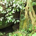 Dayak bidayuh, Kampung, authentic, Bau, Kuching, Malaysia, 沙捞越, trekking, native, tribe. traditional, travel guide, wild durian, local fruits,