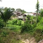 authentic, Reservoir, Bau, Kuching, Malaysia, 沙捞越, jungle trekking, tribe. traditional, travel guide, Buah Belimbing, wild durian, local fruits,