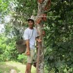 village, authentic, Bau, Kuching, Borneo, 沙捞越, nature, jungle trekking, dayak bidayuh, native, tribe. traditional, travel guide, exotic delicacy, local food,