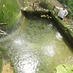 water supply, authentic, Kuching, Borneo, 沙捞越, nature, jungle trekking, dayak bidayuh, native, tribe. traditional, travel guide, Buah Belimbing, wild fruits