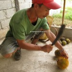 village, Bau, Kuching, Malaysia, Borneo, 沙捞越, nature, dayak bidayuh, native, tribe. traditional, travel guide, exotic delicacy, local food,