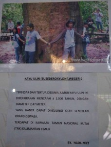 Museum Kayu, backpackers, destination, Kalimantan Timur, Kutai Kartanegara, Panji Sukarame, nature, Koleksi, Tourism, obyek wisata, travel guide, 东加里曼丹, 婆罗州, 博物馆, 旅游景点