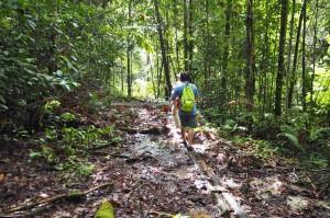 Medicinal Plants, adventure, nature, outdoors, AIr Terjun Lekasi, backpackers, destnation, Tegulang resettlement, village, Kapit, Borneo, Malaysia, Dayak penan, Tourism, travel guide