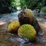 outdoor, canyon, jungle trekking, air terjun, village, Kampung Gahat, Exotic Fruits, exploration, durian, flora, Serian, Malaysia, 沙捞越, Tourism