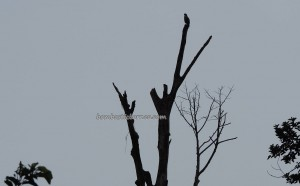 Betong, Wetland Park, wildlife, Protected Species, adventure, nature, Boat ride, helang, Oriental pied hornbill, fishing village, Borneo, Malaysia, tourist attraction, travel guide, 沙捞越婆罗洲,