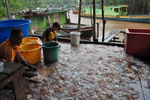 Kilang proses Ubur Ubur, Stingless Jellyfish, ethnic malay, nature, backpackers, Betong, Borneo, Malaysia, homestay, Kampung Melayu, tourism, tourist attraction, 沙捞越婆罗洲, 水母