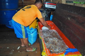 Kilang proses Ubur Ubur, Processing Factory, exotic seafood, adventure, backpackers, Betong, Borneo, Malaysia, homestay, Kampung Melayu, Tourism, tourist attraction, Maludam National Park, 沙捞越婆罗洲, 水母