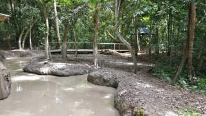 national park, Pulau Tiga resort, nature, exploration, jungle trekking, destination, Sabah, Malaysia, Kuala Penyu, Pagong Pagong beach, Tourism, tourist attraction, crossborder, 沙巴婆罗洲, 旅游景点