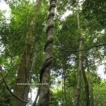 mountain, adventure, nature, outdoor, hiking, traditional, dayak bidayuh, Kampung Gumbang, Bau, Kuching, Malaysia, Tourism, transborder, 婆罗洲砂拉越