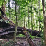 mud volcano, national park, Pulau Tiga, adventure, outdoor, exploration, jungle trekking, Malaysia, Kuala Penyu, Pagong Pagong beach, Tourism, tourist attraction, transborder, nature, 沙巴马来西亚