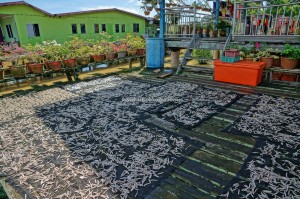 Keropok Tahai, Smoked fish, exotic delicacy, seafood, Kampung Punang, authentic, destination, nelayan, Sarawak, Lawas, Limbang, Malaysia, tourist attraction, transborder, 老越砂拉越,