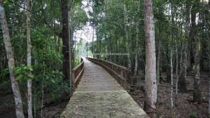 adventure, nature, authentic village, backpackers, destination, Borneo, Indonesia, Kapuas Hulu, native, Suku Dayak Iban, Tourism, tourist attraction, travel guide, transborder, Danau sentarum national park, 婆罗洲旅游景点