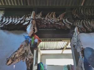 Gawai Harvest Festival, Bengkayang, Borneo, Indonesia, Desa Tangguh, Dusun Betung, Siding, native, tribe, objek wisata, Tourism, traditional, travel guide, transborder, 西加里曼丹, 婆罗洲原著民