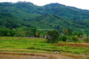 backpackers, destination, Sinurambi Viewing Point, Menara tinjau, terraced paddy fields, Borneo, Interior Division, Malaysia, orang asal, Tourism, tourist attraction, traditional, travel guide, crossborder, Trusmadi Range, Crocker Range,
