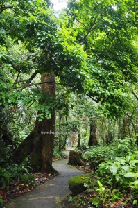 Rainforest Paradise, nature, outdoor, exploration, conservation, Crocker Range Park, backpackers, destination, Kampung Patau, Malaysia, Tourism, tourist attraction, travel guide, transborder, 坦布南沙巴, 婆罗洲旅游景点,