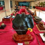 Persatuan Bonsai Sarawak, Association, Kuching, Malaysia, Borneo, Tourism, travel guide, nature, hobby, event, exhibition, show, fossilized, petrified wood, stone,